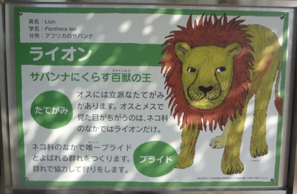 ライオン説明